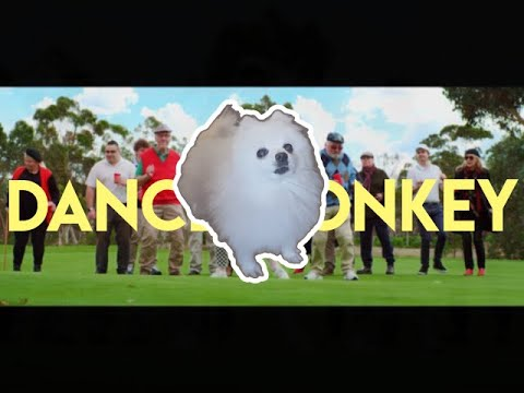 Tones and i - Dance Monkey   Gabe The Dog (Cover)