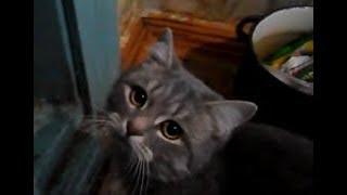 Владик попросился на улицу зимой (2 день  зимнее утро, смешные коты и кошки)