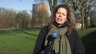PvdD wil lasers in plaats van kogels voor verwilderde duiven in Stad en Ten Boer