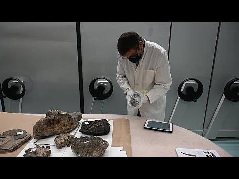 شرطة كرواتيا تعثر على مستحاثات عمرها 15 مليون سنة في صندوق سيارة…  - نشر قبل 49 دقيقة