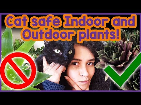 Plants That Are Toxic To Cats! Common Houseplants That Are Toxic To Cats And Which Plants Are Safe!