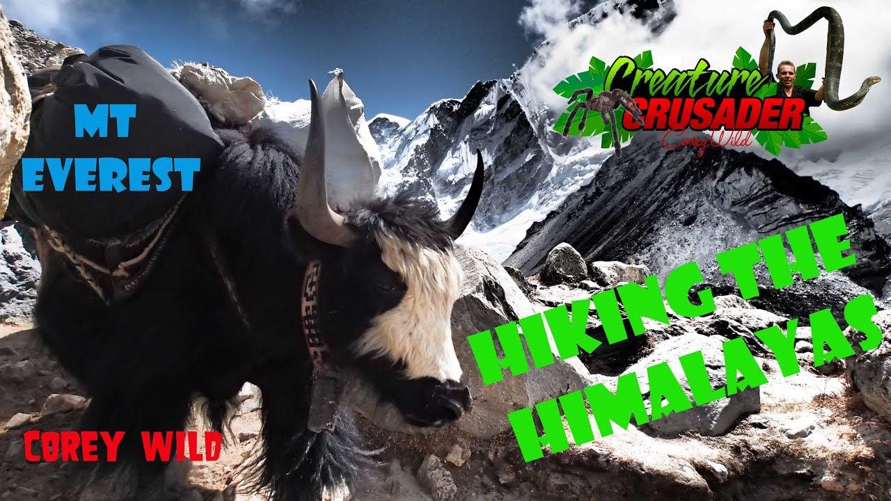 HIKING to Mt EVEREST BASE CAMP treck Nepal