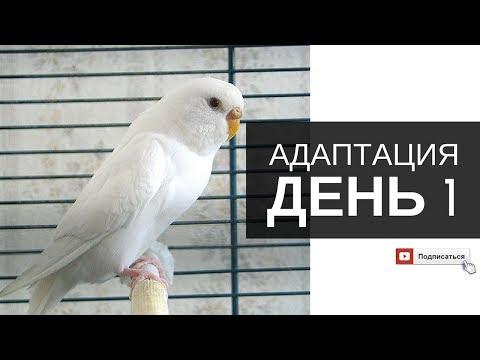 Купили волнистого попугая. День 1: Адаптация