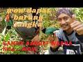 Jebak Burung Di Kebun Pisang Dapat Burung Langka  Mp3 - Mp4 Download