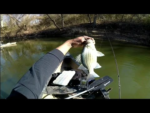 FISHING FOR WHITE BASS AND YELLOW BASS IN THE CREEK 💣