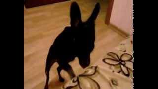 собака и диван(, 2014-01-12T12:58:47.000Z)