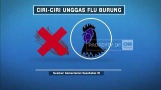 Apa itu flu burung atau h5n1, serta gejala jika tertular pada manusia dan hewan lalu bagaimana cara mencegahnya?