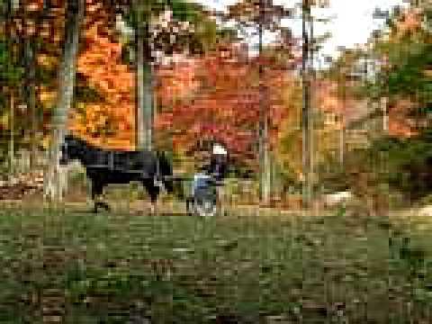 Carriage horse lazy (lacks energy)