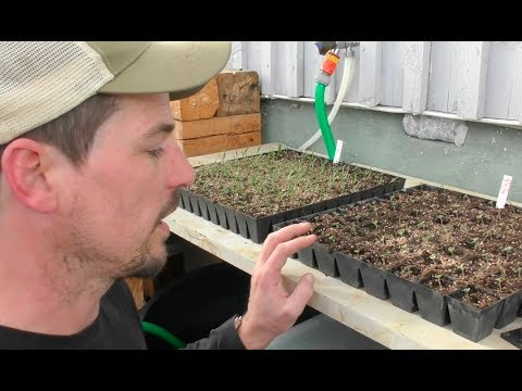 S5 ● E17 Low-cost, low-tech, low-energy seed starts in a cold climate