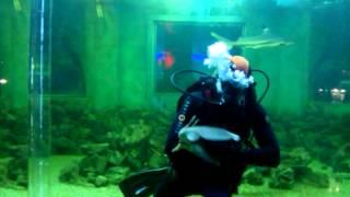 Танец акулы