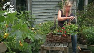 How To... Make The Most Of Your Small Space Garden - Window Box Gardening