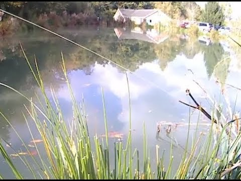 POLE FISHING FOR CARP, Woodland View  With Fish With Bish