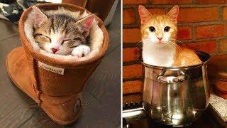 Вы даже не подозреваете, куда может забраться ваша кошка!