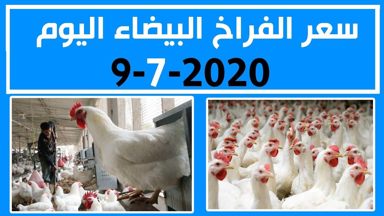 سعر الفراخ البيضاء اليوم الخميس 9-7-2020 في بورصة الدواجن في مصر