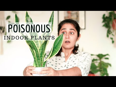 Poisonous Indoor Plants | Must Know Facts