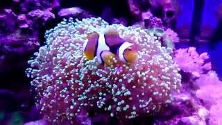 Рыбки и кораллы в морском аквариуме 60 литров