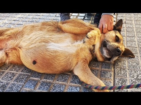 AMAZING TRANSFORMATION OF DOG WITH A MASSIVE TUMOR... TOTAL HAPPINESS!
