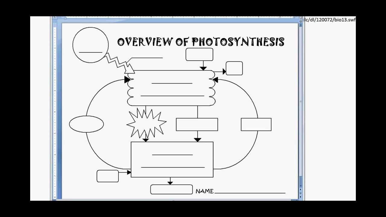 Marchand Biology - Photosynthesis Diagram