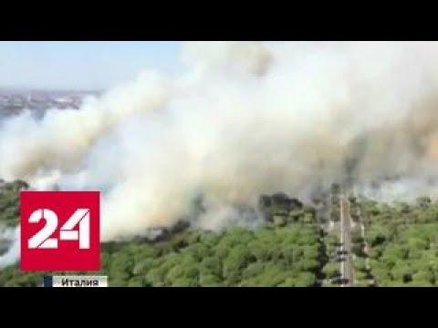 Европа в огне: лесные пожары бушуют во Франции, на Сицилии и в Черногории