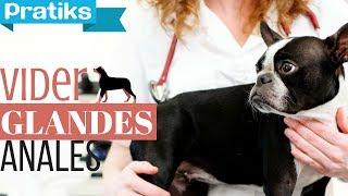 Conseils véto - Comment vider les glandes anales de votre chien ?