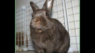 Review: Bunny Box (subscription box sent to us) thumbnail