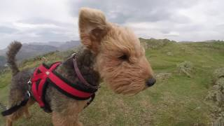 Lola's Lakeland Day Out