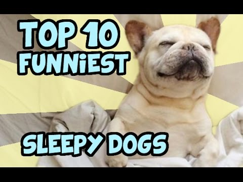 TOP 10 HILARIOUS SLEEPY DOGS