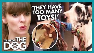 These Dogs Have Too Many Toys [YOUTUBE EXCLUSIVE] | It's Me or the Dog