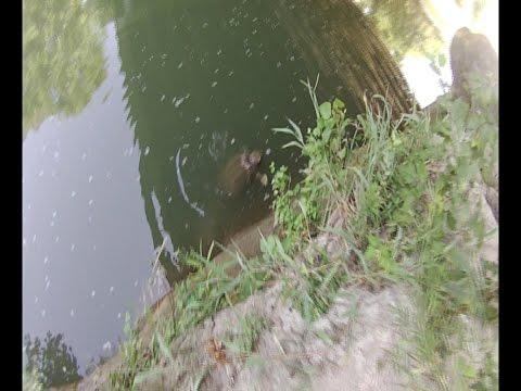 Trinity River Monster