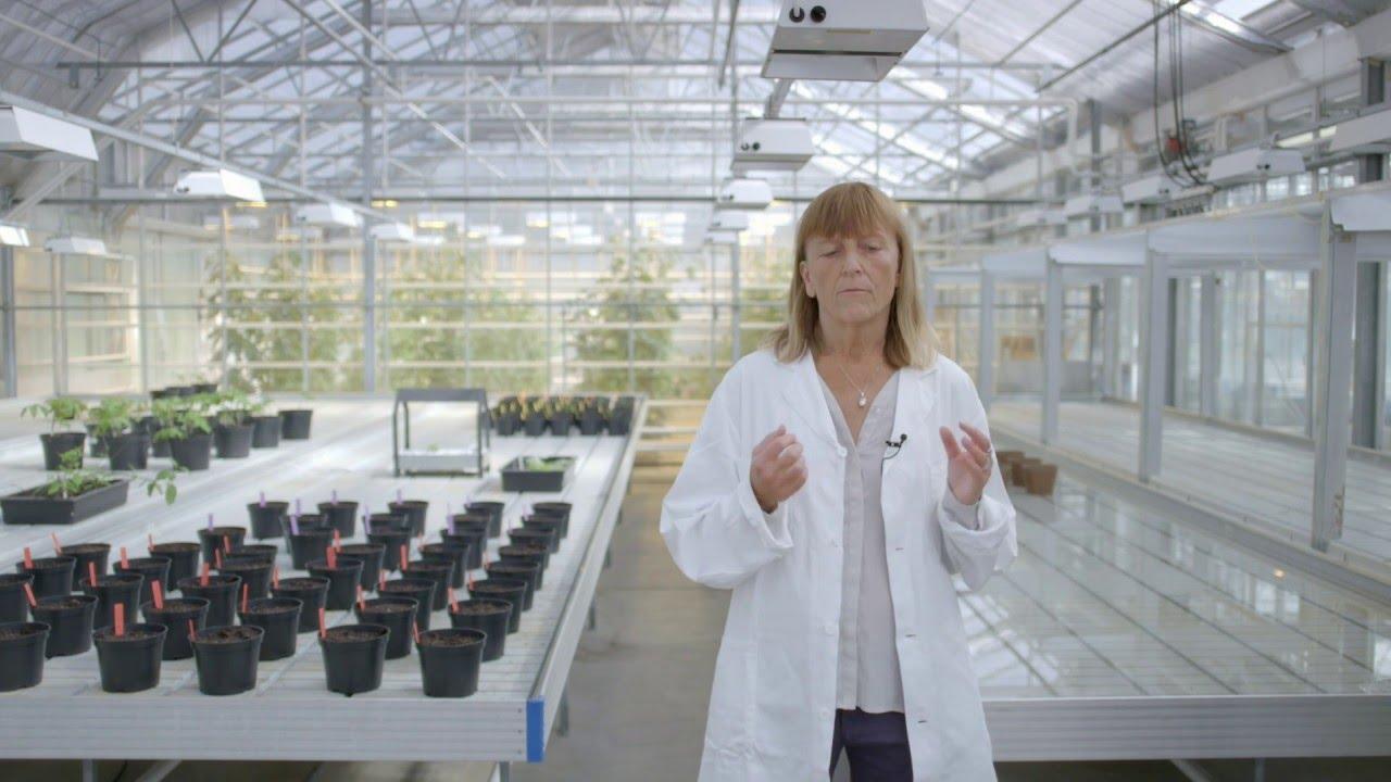 Ikea Vaxer Und Krydda Das Einfache Hydrokultursystem Youtube