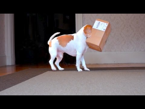 Dog vs. Weasel in Box: Funny Dog Maymo