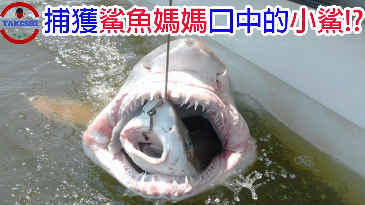 [TOP3]數個生物口中發現的生物 | 捕獲鯊魚媽媽口中的鯊魚寶寶!? | 只出現10年用胃孵化小孩的神祕生物