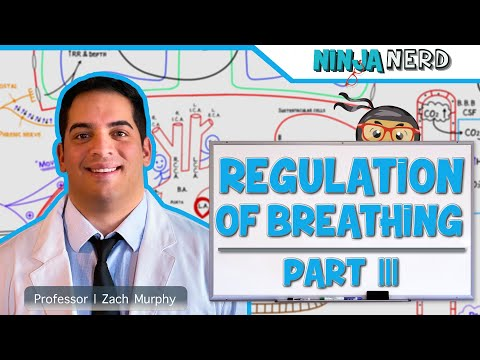 Respiratory | Regulation Of Breathing: Factors Influencing Rate And Depth | Part 3