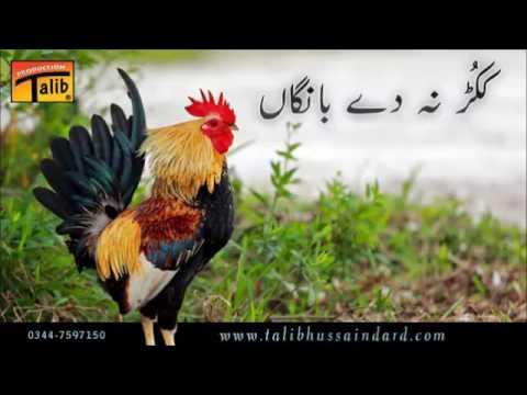 Talib Hussain Dard ► (Kukkar Na De Bangan)