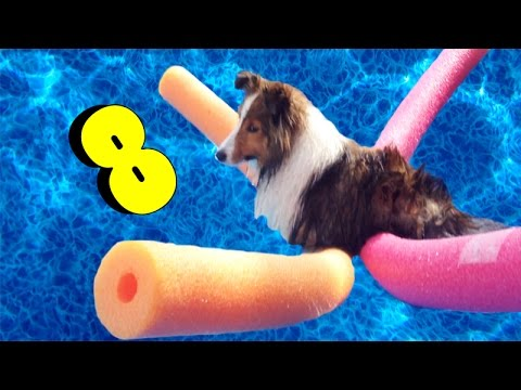 How To Make Your Dog LOVE Water! - E8
