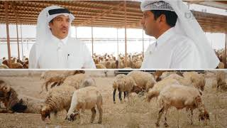 برنامج إنتاج قطر - الجزء الثاني من مزرعة الوعب - 18-10-2017