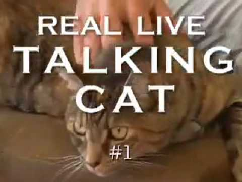 Real Live Talking Cat #1
