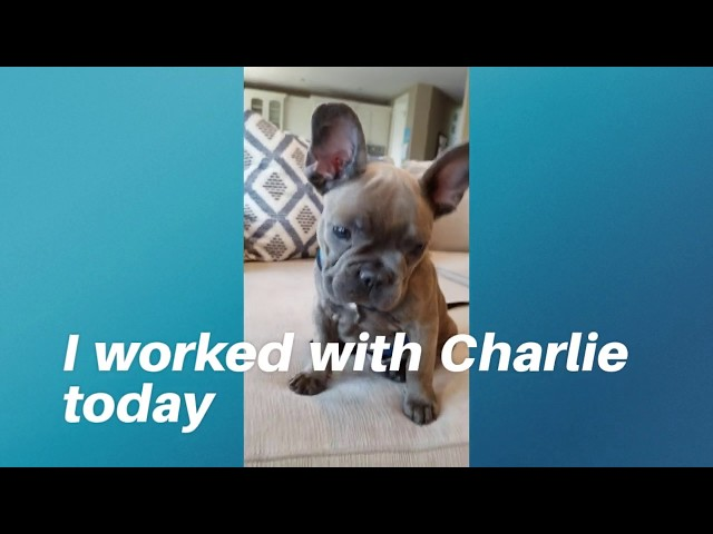 The day in the life of a Dog Trainer