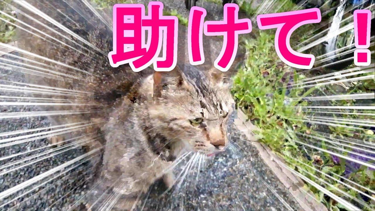 野良猫を助けるために、みなさんの元気球を下さい。