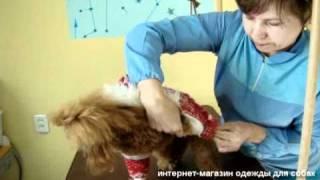 www.zoostyle-ekb.ru - Как определить размер одежды для собак.avi