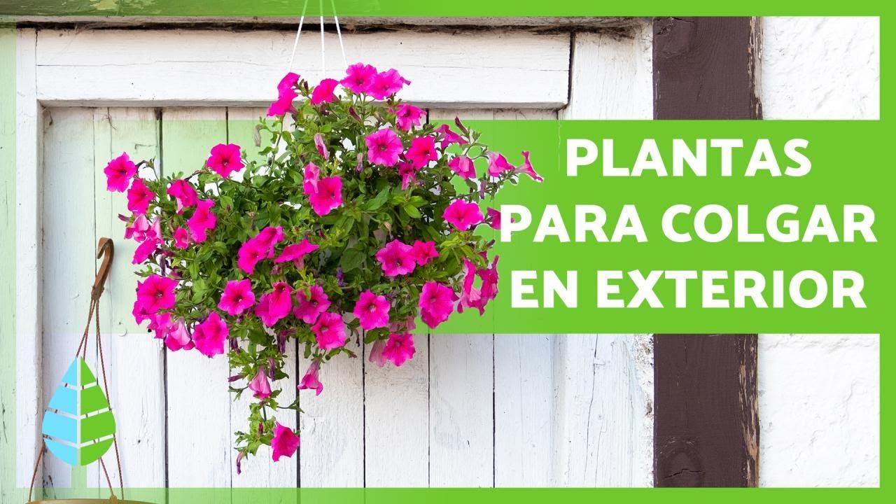 10 PLANTAS COLGANTES de EXTERIOR 🌸🌿 (de Sol y de Sombra)