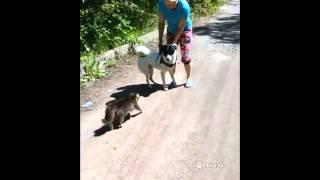 Кот-гопник