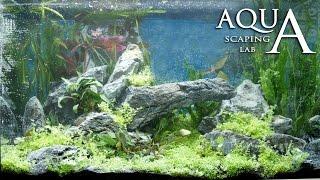 Aquascaping Lab - Tutorial Iwagumi Aquarium stone and meadow