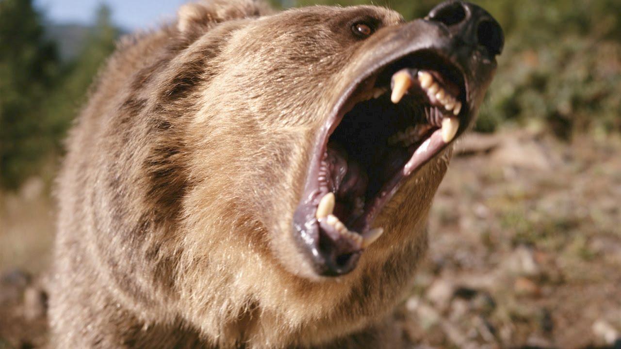 Hayvan Saldırıları Dünyadaki 15 Korkunç Hayvan Saldırısı Youtube