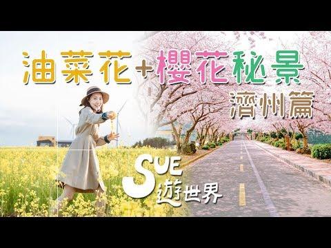 油菜花+櫻花秘景 濟州篇《Sue遊世界》
