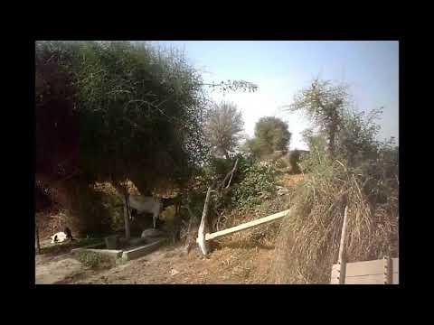 Sindhi Vlog - Interesting Chat With Sain Muhammad Bux Sahto