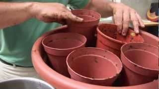 Ask Ian: Container Gardening