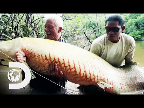 Jeremy Catches A Monstrous 250lb Arapaima On A Fly Rod | River Monsters
