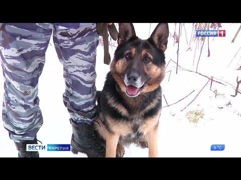 В Петрозаводске собака помогла раскрыть разбойное нападение