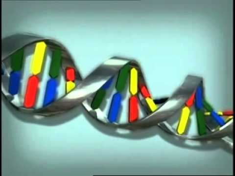 Animation How DNA Works
